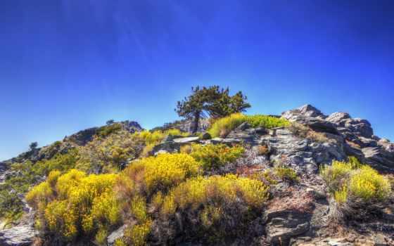 растения, россии, природа, hypnosis, landscapes, mountains, лес, горы, views,