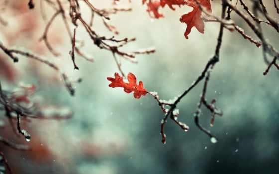 снег, природа, ветви