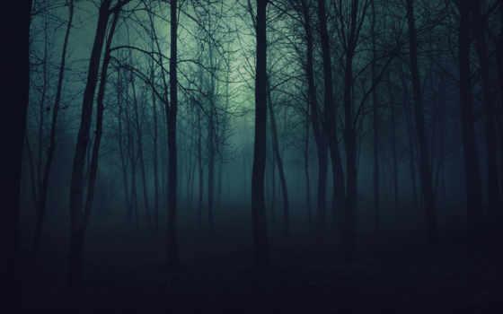 les, деревя, темный, просмотреть, туман,