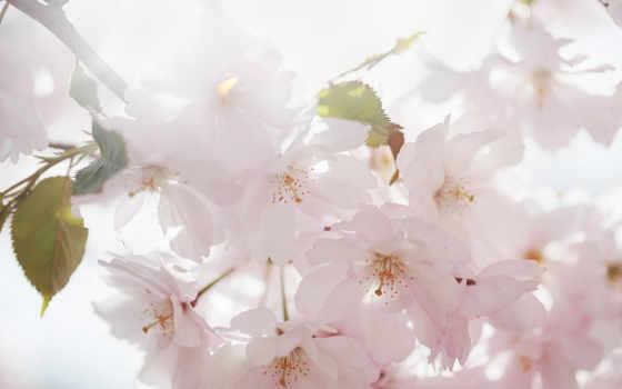 Цветы 103150