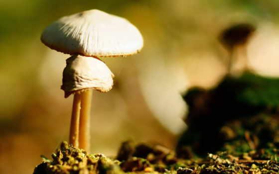 jamur, грибы, ponsel, putih, alam, lain, dipimpin, belakang, latar, ди,