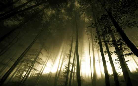 природа, свет, ночь, лес, dark, trees, разных, стволы, foggy, бугор,