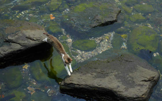 кот, прыжок, камни, море, water, назад, акула, свернуть, картинка,