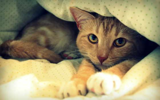 кот, девушка, кровать, kliknij, постеле, одеяло, zhivotnye, dos, para, tạo,