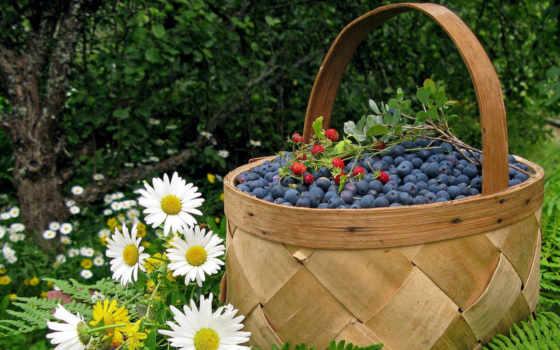 ягоды, лукошко, ромашки, картинка, berries, chamomile, разные, resolution, download, selected, total, теме, window, новости, темы, views,