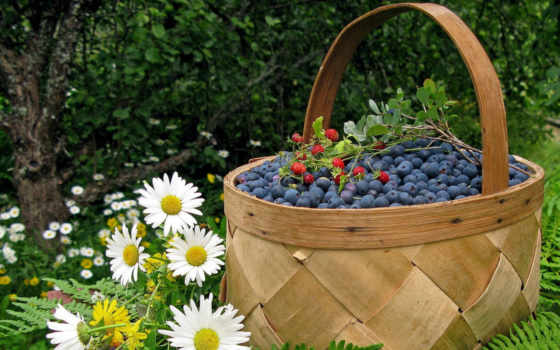 ягоды, лукошко