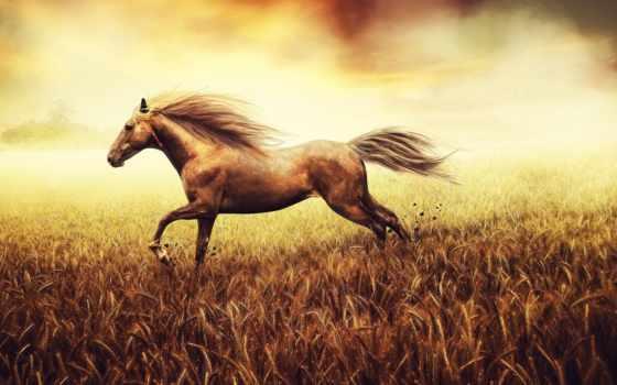 horse, поле