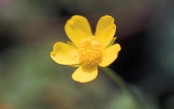 flores, imagenes, colores, las, бесстрашие, alta, фотообои, más, definición, mejores, solo, lugar,