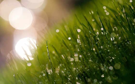 утро, роса, трава