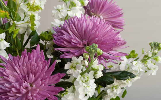 цветы, букеты, хризантемы