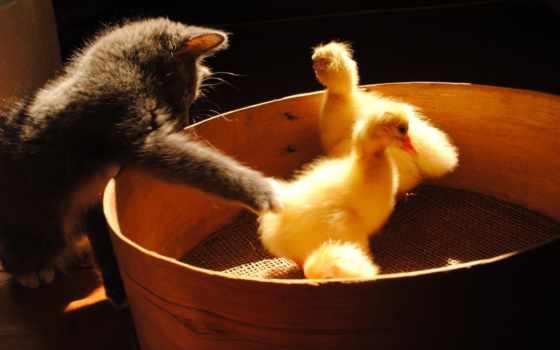 животные, животных, кошки