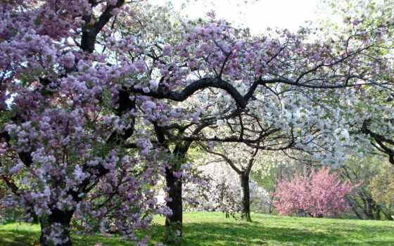 весна, garden, деревья