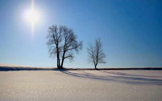 снег, поле, деревья