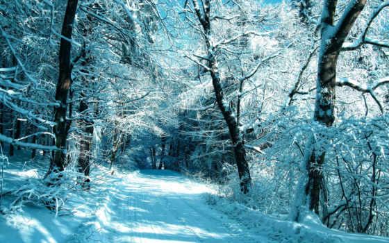 дорога, зимняя, лес