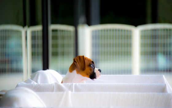 собака, кровать, современный