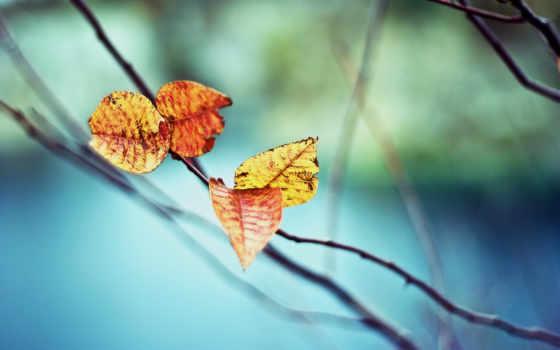 осень, листья, desktop, miscellaneous, free, растение, природа,