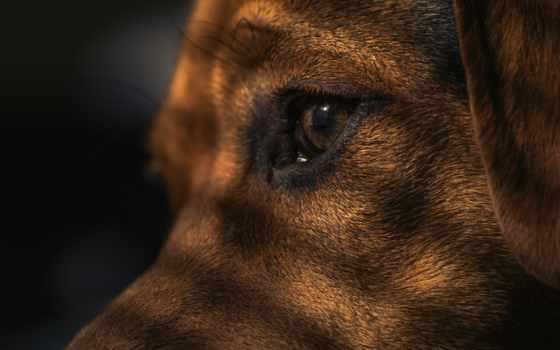 собака, waiting, pet, canine, you, free, pixabay, images,