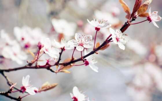 flores, fondos, pantalla, blancas, primavera, pictureicon, pinterest, free, rboles, оформления,