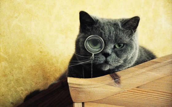 кот, очках, коты, дуб, посмотрим, ученый, everything, лукоморья, погладил,