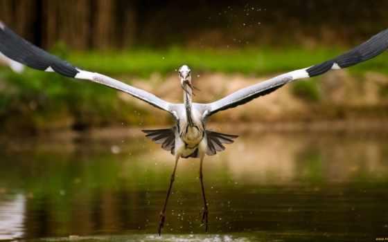 птицы, аистов, zhivotnye