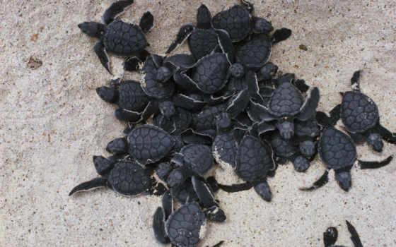 черепахи, животные, рептилии