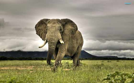 zhivotnye, слон, красивые