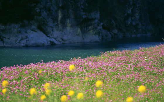 summer, природа, настроения