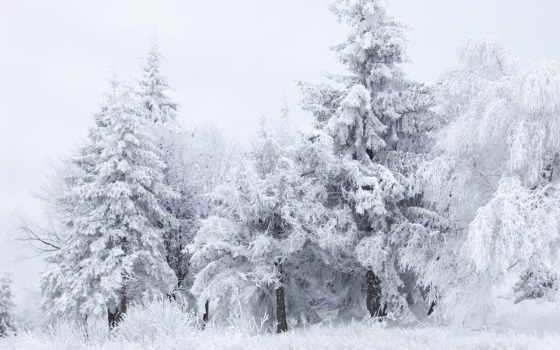 лес, winter, снег Фон № 148247 разрешение 1920x1440