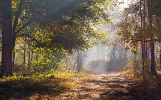 фото, oxana, галанзовская, лес, автора, альбома, загружено,
