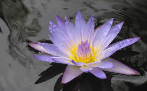 цветы, cvety, water, красивые, страница, самые,