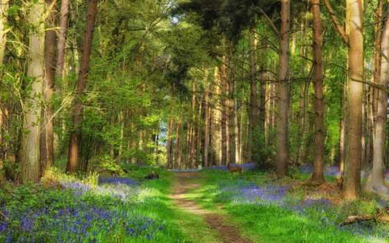 лес, природа, trees, дорога, трава, cvety, коллекция, пользователя, лань,