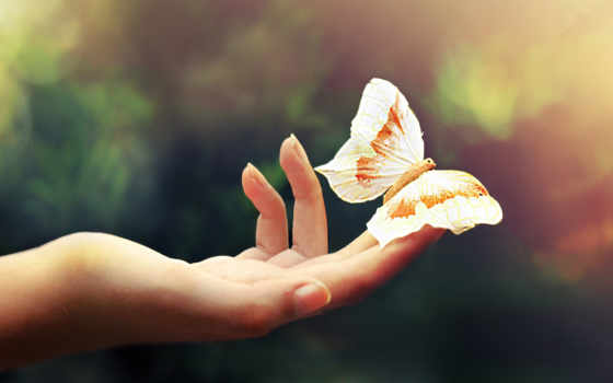 бабочка, руке, рисунок, тату, color, рука, легкость, пальцы, desire,