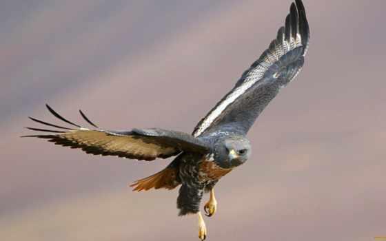 birds, prey, полет