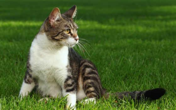 zhivotnye, herbe, кошки, породы, cosmos, кот, дворовые, регистрации, chats,