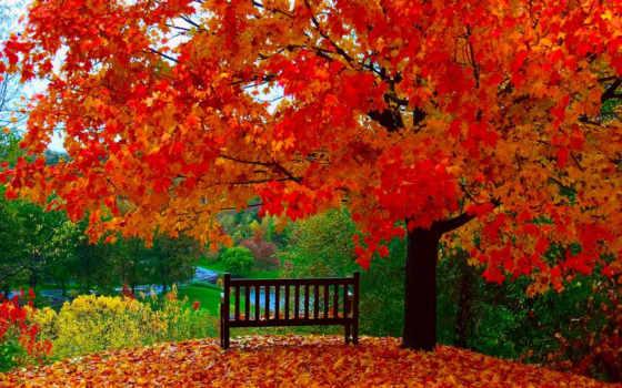 природа, категория, года, осени, golden, autumn, стерео, времена, vipics,