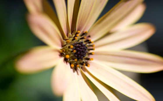 цветок, макро Фон № 27636 разрешение 1920x1200