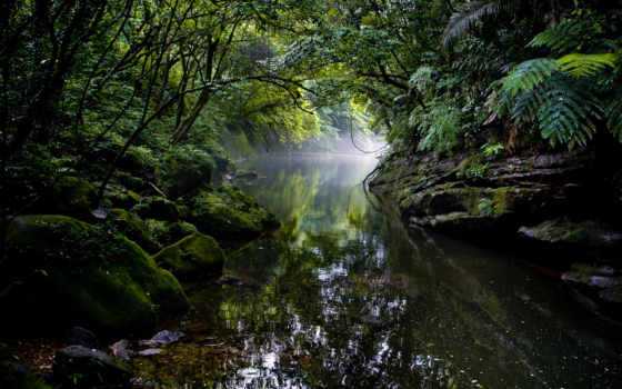 jungle, desire, природа