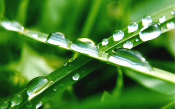 трава, кб, зелёная