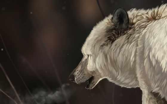 art, волк, снег