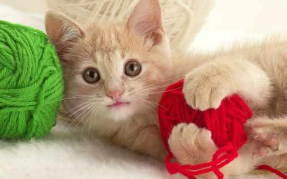 красивые, кот, бежевая