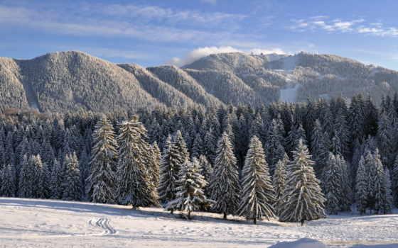 природа, нравится, winter, лес, разных, снегом, хвойный, заснеженный, зимой,