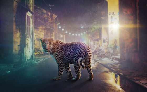 город, улица, леопард, дорога, дикая, дождь, кот, ночь, imgator,