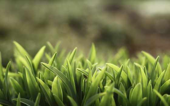 трава, макро, растения, природа, summer, зелёный, поле, газон,