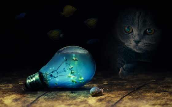 кот, лампочка, fish, свет, серый, мяч, sit, row, floats, see