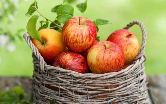 яблоки, корзине, apple
