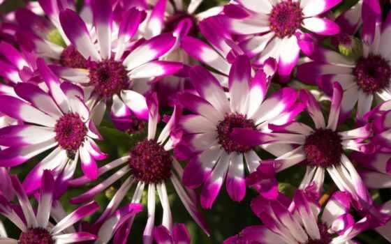 flowers, purple, цветы