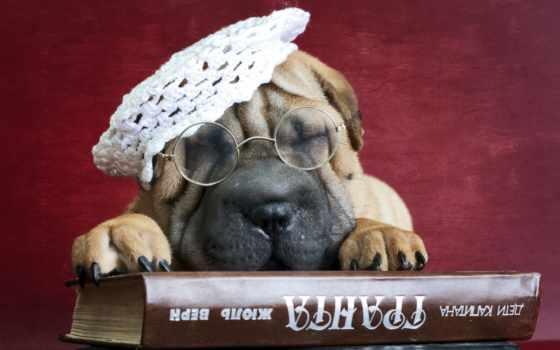 собака, книга, друг, шарпеи, очки, share,