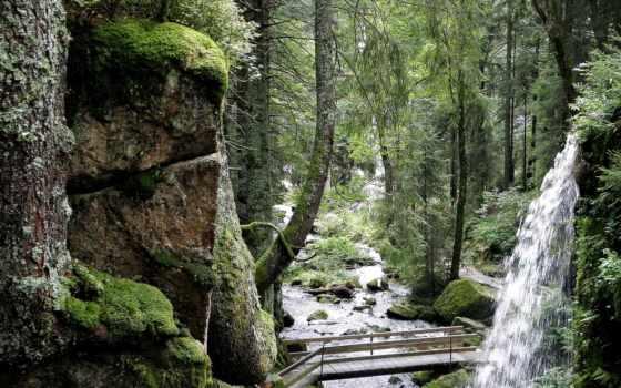 леса, поверхности, часть, значительную, земли, они, источником, являются, покрывают, только, но,