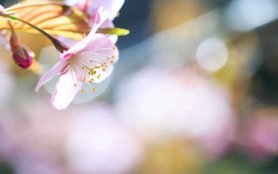branch, cvety, дерево, весна, devushki, фоны, liveinternet, крупным, планом, часть,
