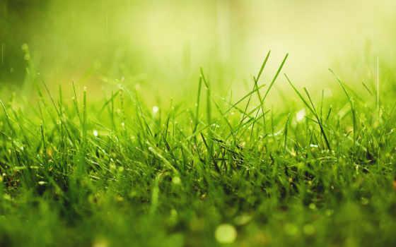 трава, капли, роса, макро, зелёный, природа, дождь, картинка, water,